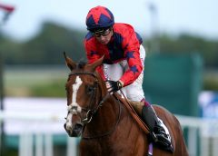Andrew Balding expecting 'very competitive' run from Imperial Fighter in Vertem Futurity Trophy   Racing News